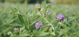 Surfaces d'intérêt écologique : le Parlement européen souhaite interdire les pesticides