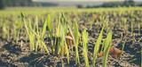 Etats généraux de l'alimentation : la dernière chance pour le maintien de l'agriculture biologique ?