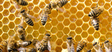 Abeilles : les apiculteurs dénoncent l'autorisation d'un nouveau néonicotinoïde en France
