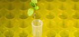Nouveaux OGM : vers une gestion des plantes au cas par cas ?