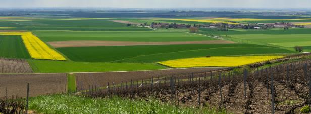 Réduction des pesticides : le gouvernement présente un plan d'action