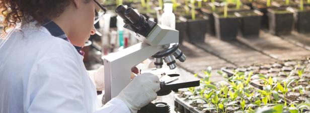 Impacts sanitaires des néonicotinoïdes : l'Anses alerte sur le thiaclopride