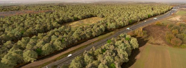 Ile-de-France : une forêt s'installe sur des sols pollués