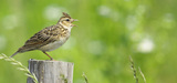 Le CNRS et le Muséum démontrent une corrélation entre disparition des oiseaux et agriculture intensive
