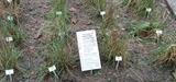 Surveillance de l'air ambiant : les pollens et moisissures en ligne de mire