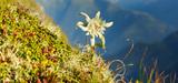 Déclin de la biodiversité : plus de 500 experts du monde entier lancent un avertissement historique