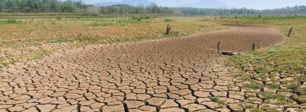 La dégradation des terres impacte d'ores et déjà les deux cinquièmes de l'humanité