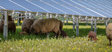Groupe de travail solaire : les principaux enjeux