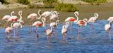 Nouveau plan Biodiversité : les gestionnaires d'espaces naturels réaffirment leur place