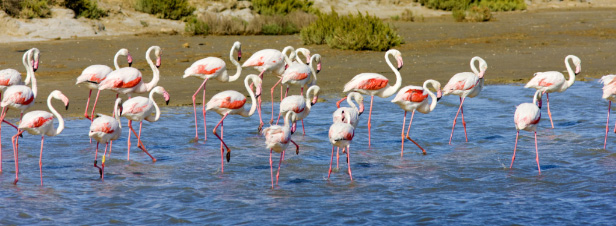 Nouveau plan Biodiversité: les gestionnaires d'espaces naturels réaffirment leur place