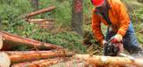 Renouvelables : les emplois français reposent sur la biomasse et les agrocarburants