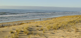 Recul du trait de côte : les dunes sont la protection la moins coûteuse et la plus efficace à long terme