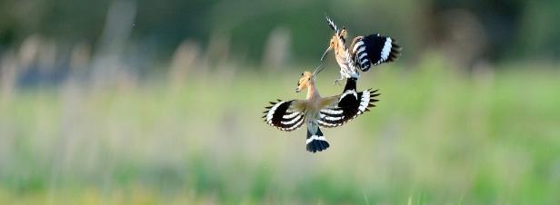 A défaut de plan, Nicolas Hulot appelle à une mobilisation sur la biodiversité