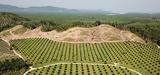 La stratégie de déforestation importée entachée par l'autorisation donnée à Total à La Mède