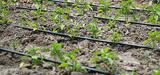 La Commission européenne va faciliter la réutilisation de l'eau en agriculture