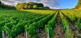 Bio, plastique, phyto : les sénateurs sont revenus sur le projet de loi agriculture en commission
