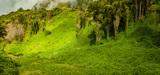 Exploitation de la biodiversité : le dispositif de partage des avantages n'est pas opérationnel
