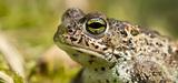 Plan biodiversité : de fortes attentes en faveur d'une réforme de la fiscalité
