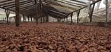 Déforestation importée : la stratégie du gouvernement mise sur le volontariat