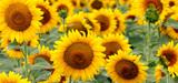 Nouveaux OGM : la réglementation européenne s'applique aux nouvelles techniques de mutagénèse, selon la CJUE