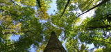 Climat : l'Union européenne adopte un règlement sur les puits de carbone
