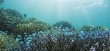 Les aires marines partiellement protégées ne sont pas toujours efficaces