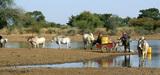 Les politiques climatiques globales risquent d'accentuer l'insécurité alimentaire