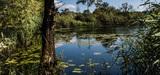 Biodiversité : les préfets vont pouvoir protéger les habitats naturels en tant que tels