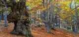 Nature 2050 : CDC Biodiversité accompagne désormais 26 projets de restauration écologique