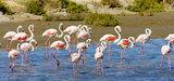 Parcs naturels régionaux : leurs missions appelées à se renforcer