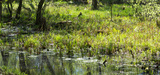 Biodiversité : vers une organisation de la compensation à l'échelle d'un territoire