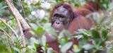 Des pistes pour enrayer d'urgence la disparition de la faune sauvage