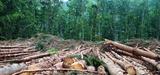 Lutte contre la déforestation importée : une nouvelle stratégie française incitative