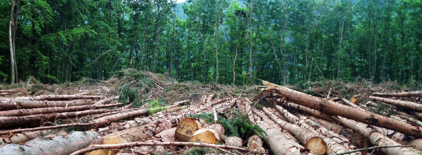 Lutte contre la déforestation importée: une nouvelle stratégie française incitative
