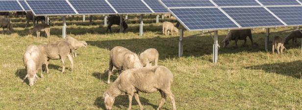 Terres agricoles: la nouvelle frontière du photovoltaïque au sol