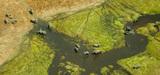 Plus de 190 Etats réunis pour tenter d'enrayer l'effondrement de la biodiversité