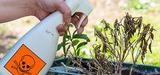 La vente de pesticides aux jardiniers amateurs est interdite à compter du 1er janvier