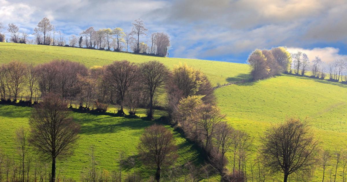 L'avenir de la plupart des terres de Notre-Dame-des-Landes est désormais tracé