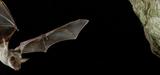 Biodiversité: en France, un quart des espèces évaluées sont éteintes ou menacées