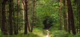 Ile-de-France: deux visions de la nature s'affrontent dans la forêt de Romainville