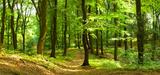 Les solutions basées sur la nature, clés de la réduction du risque climatique