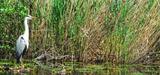 La préservation des zones humides passera par une gestion accrue par les territoires