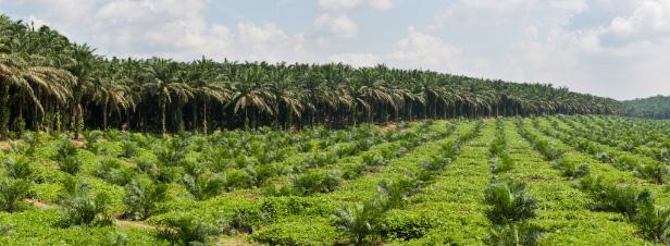 Biocarburants : la Commission met en consultation les critères d'impacts environnementaux
