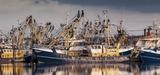 L'Union européenne interdit la pêche électrique au 30 juin 2021