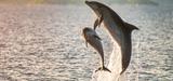 La définition du bon état écologique des eaux marines évolue