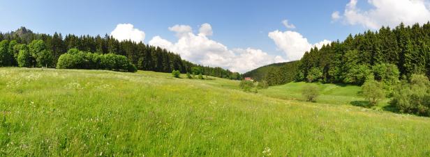 Neutralité carbone: les écosystèmes constituent un puits carbone important, mais incertain
