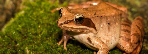 Un million d'espèces sont menacées d'extinction