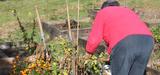 La ville de Grande-Synthe lance un revenu de transition écologique