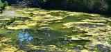 Eutrophisation des masses d'eau : l'Etat demande une révision rapide des zones sensibles