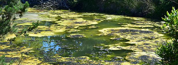 Eutrophisation des masses d'eau: l'Etat demande une révision rapide des zones sensibles